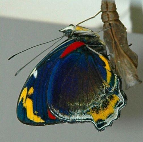 Butterflies And Moths 22