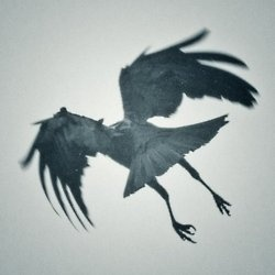 : Inspiration, The Crows, Wings, Dark, Birds, Photo, Black, Ravens, Animal