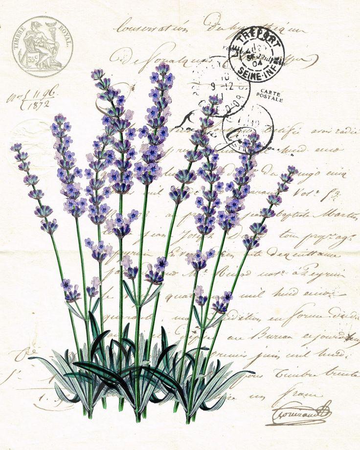 Botanical Print Lavender                                                                                                                                                                                 Más