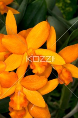 close-up of orange flowers. - Close-up shot of orange flowers.