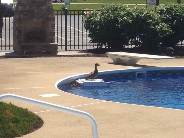 This duck is ready to voyage.  #Solar-Breeze will take him ...