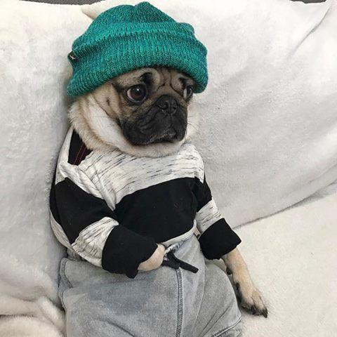 Best 25+ Doug the pug ideas on Pinterest | Pugs, The pug ...
