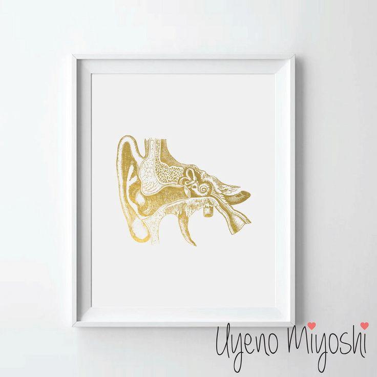 Human Ear Anatomy Gold Foil Print, Gold Print, Custom Print in Gold, Illustration Art Print, Human Ear Gold Foil Art Print, Ear Anatomy by UyenoMiyoshi on Etsy