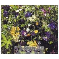 Trvalky směs rozkvetlá lesní louka - prodej semínek trvalek - 0,9 gr