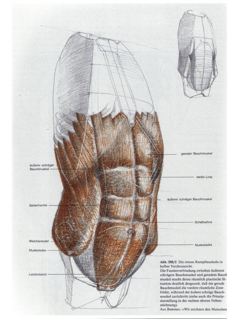 Fantastisch Grau Anatomie Online Galerie - Menschliche Anatomie ...