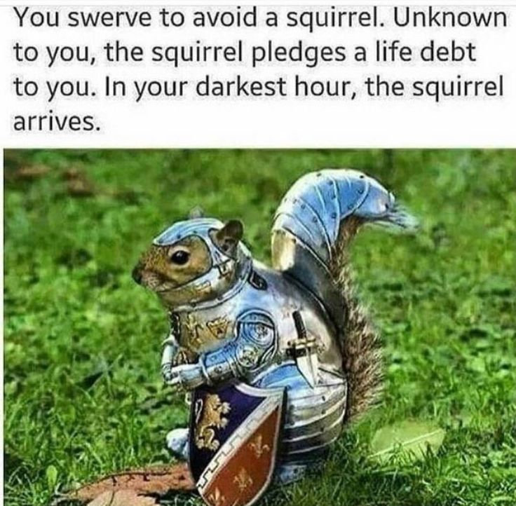 You swerve to avoid a squirrel. Unknown to you, the squirrel pledges a life debt to you. In your darkest hour, the squirrel arrives.