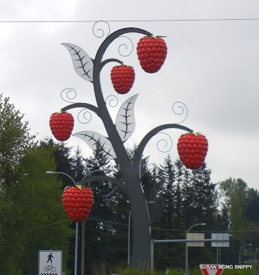 the worlds largest Raspberry Plant, right here in my town of Abbotsford, BC Canada
