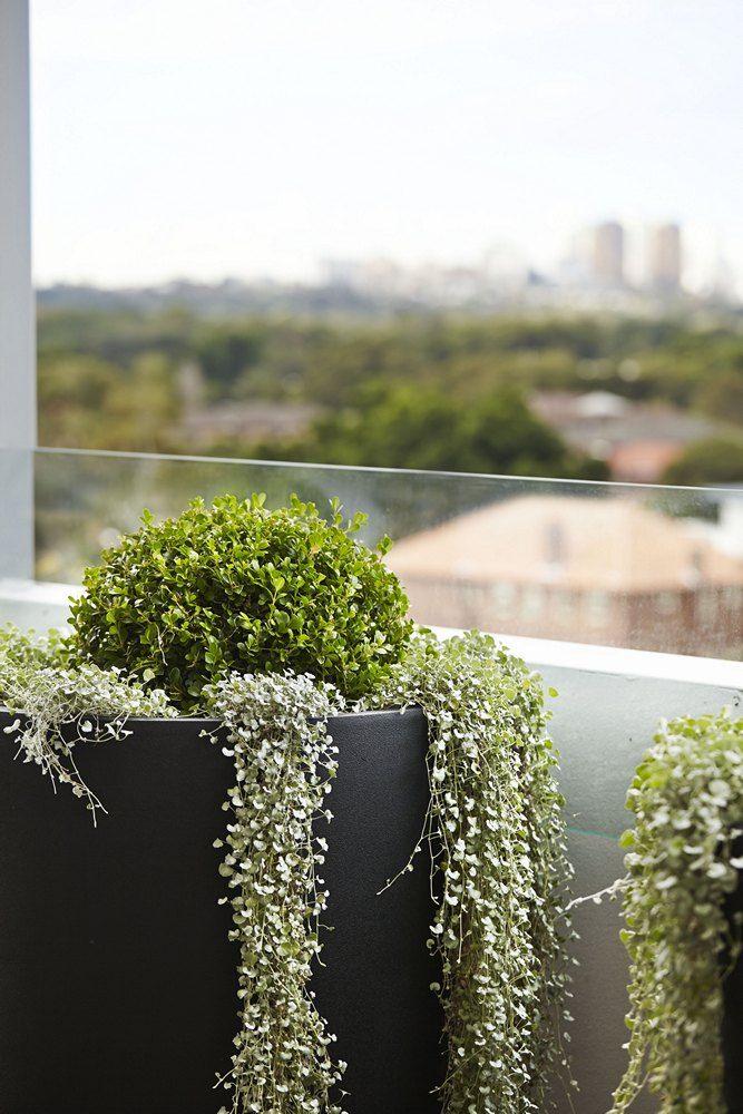 Frankie Tub Charcoal | Garden Pots | Pot Plants | Flower Pots | Garden Pots Online | Outdoor Pots | Buy Garden Pots | Ceramic | Atlantis | Planters | Balcony Garden | Rooftop Gardens