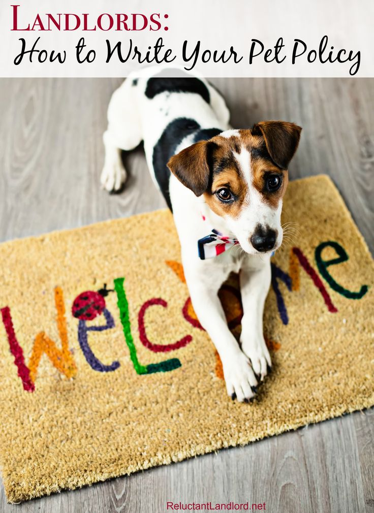 Landlords, do you need a pet policy? Here are some great examples on how to write a pet policy and tips for why you should have one!