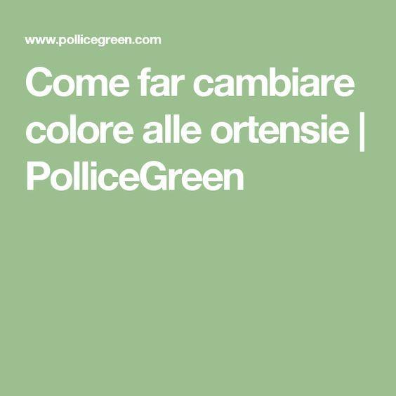 Come far cambiare colore alle ortensie | PolliceGreen