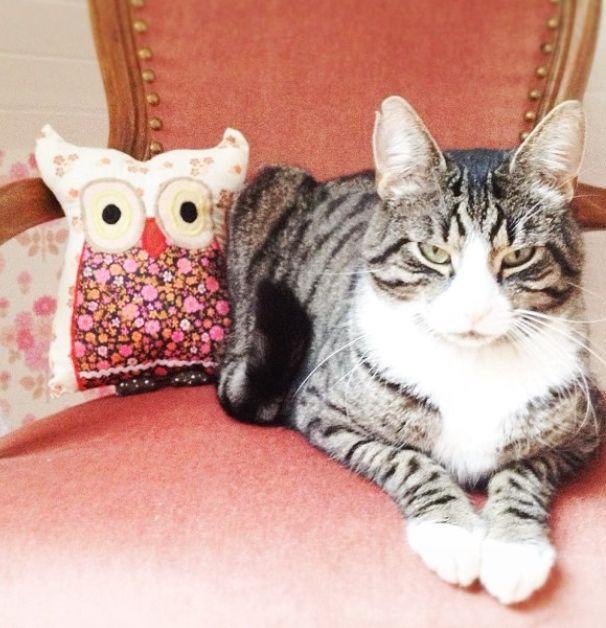 Cat (Boris:)