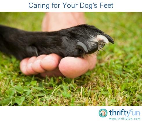 Chicken Feet Dog Treat Recipe