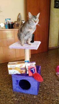 Kiara, la gatita de una de las flamantes ganadoras de nuestro Concurso de Navidad, posando con su premio. ¡Enhorabuena!