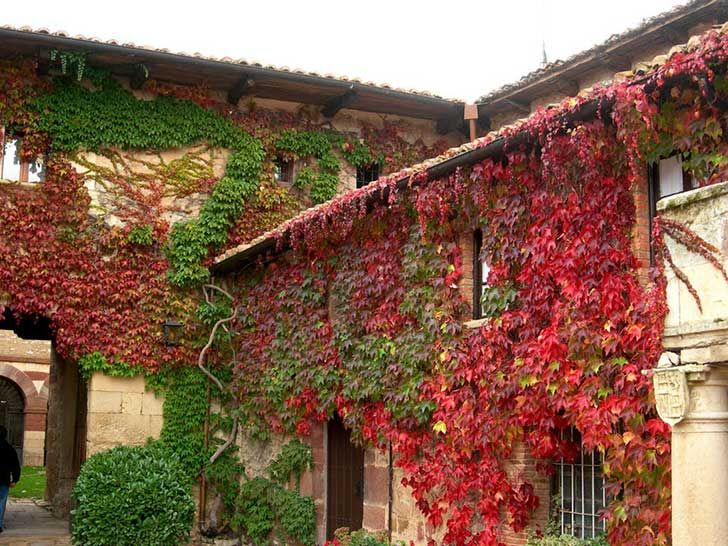 133 best images about ideas para el jard n on pinterest for Plantas para jardin exterior