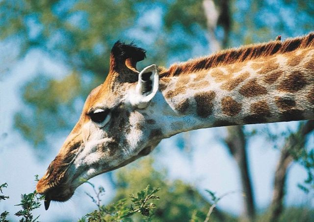 KRUGER, KINGDOMS, TROPICAL OCEANS & PANORAMIC PEAKS - 11 DAYS  http://www.africanwelcome.com/tours-and-safaris-south-africa-botswana-namibia-vicfalls/package-holidays-and-tours/kruger-kingdoms-tropical-oceans-panoramic-peaks