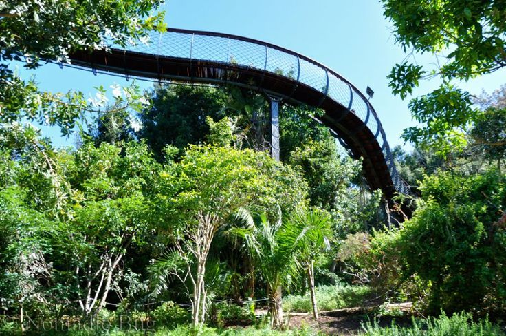 The spiralling Boomslang, Kirstenbosch Gardens, Cape Town, South Africa        Fun Things To Do In Cape Town This Summer Nomadic Existence