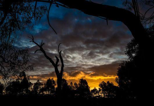 Sunset on the Bong Bong Track, Southern Highlands  An unexpected bonus on my evening walk. - Chris Sutton - Google+