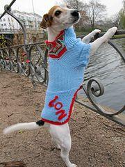 Ravelry: Little Paw Dog Sweater pattern by Wedina Schmidt