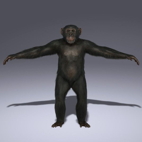 The Shave and Haircut Fur is included in each Maya 2011 format (ma/mb). *Please always use an updated Shave and a haircut release to avoid rendering issues. The model is provided in the standard pose.