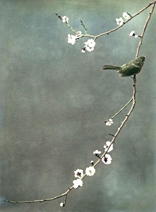 Als het dwangmatige vluchten voor het nu stopt, stroomt de vreugde van zijn in alles wat je doet.