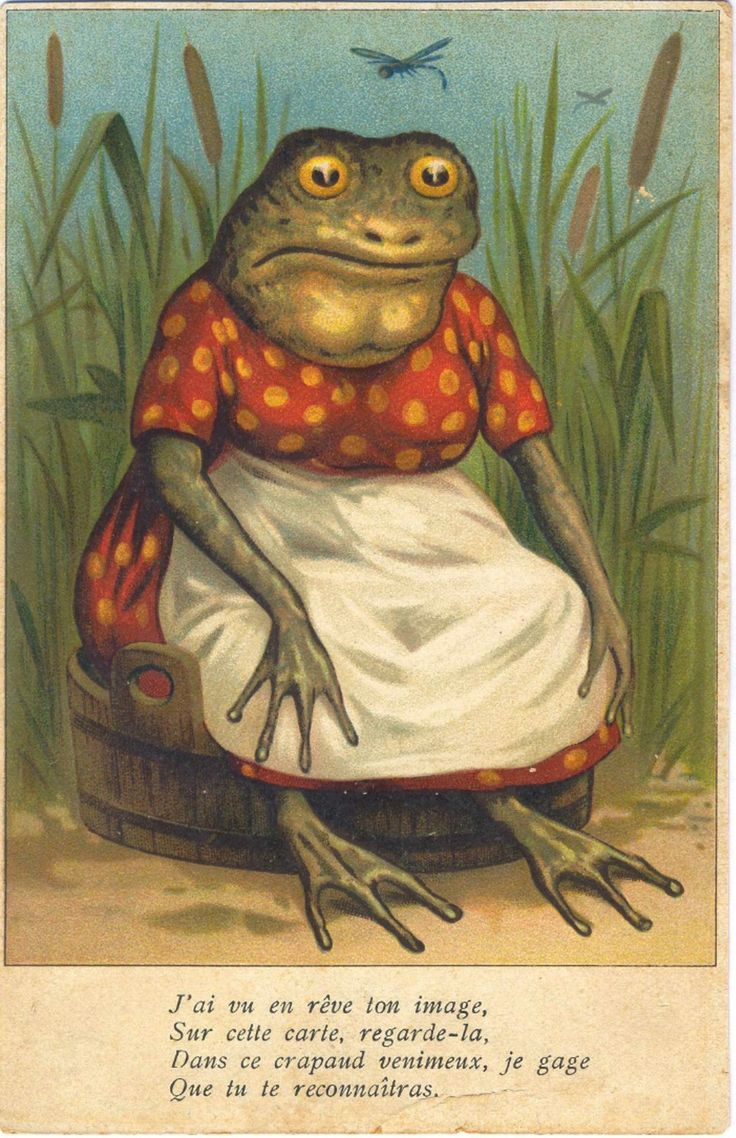 239 Best Frogs And Toads Images On Pinterest Frogs Frog Art And