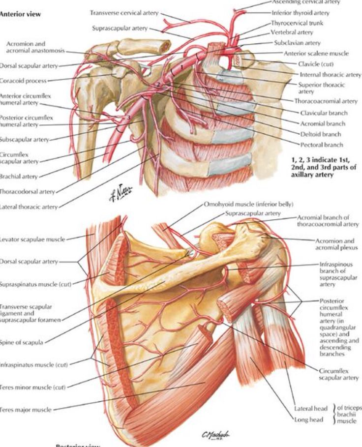 258 Best Medical Images On Pinterest Human Anatomy Human Body And
