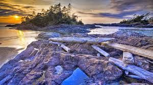 Image result for pacific rim national park