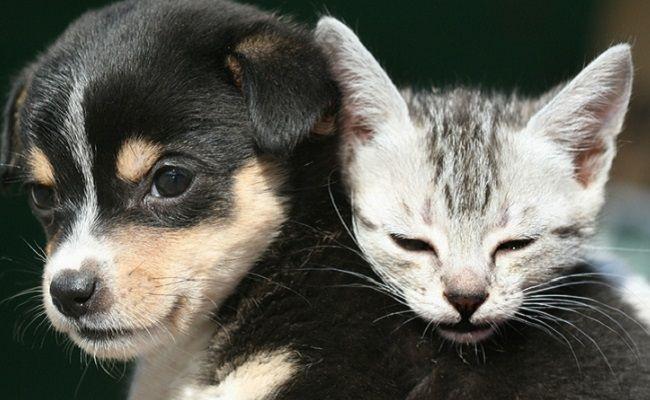 $50 Million, High-Tech Pet Adoption Center Opens In Los Angeles | Care2 Causes | A dream come true! 💖 #WallisAnnenbergPetSpace