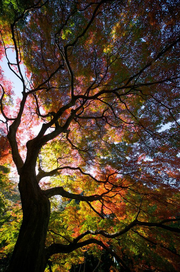 Autumn flame by Tsuguharu Hosoya*