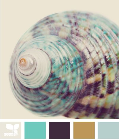 The Color of Nature's Home - Shell