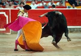 Bull fighting, passion personified.