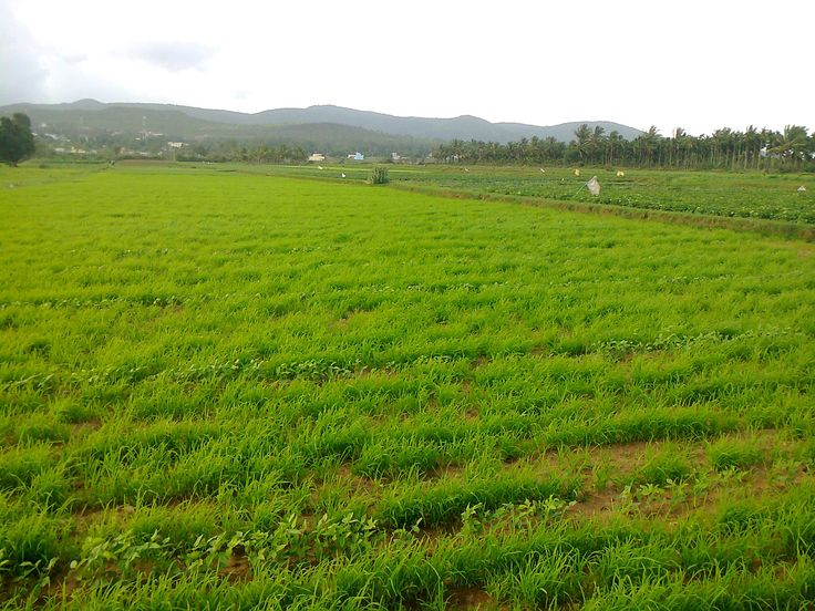 Housing Board area, Chikmagalur