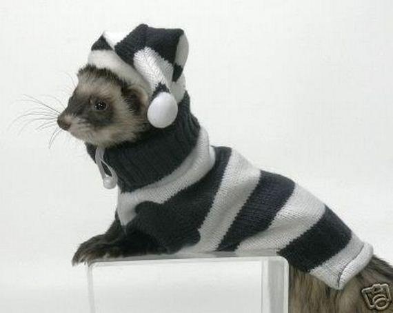 Ferrets In Sweaters & tutorial http://piperredfern.wordpress.com/2011/12/08/ferret-sweater-tutorial/