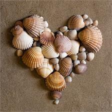 serce z muszelek
