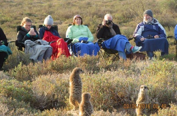 Engrave the image of the meerkats of Oudtshoorn forever in your heart  ❤  >  https://www.cat-africa.com/en/day-experiences/view/379/the-meerkats-ostriches-of-oudtshoorn