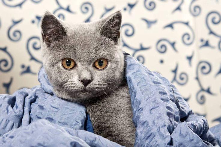 Megasüße Katzenfotos: Deswegen lieben wir Katzen! Bild 9 - Frauen