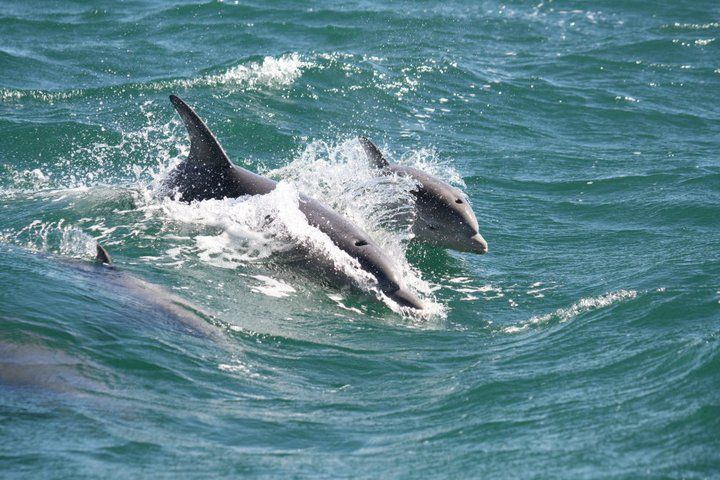 An un-named baby learning to surf with Mum. This baby was born in June 2011.