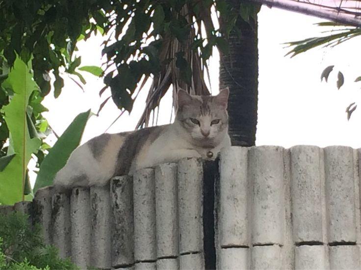 cantik kucing ni!