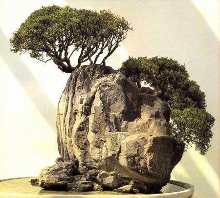 ISHITSUKI – Árvore sobre rocha