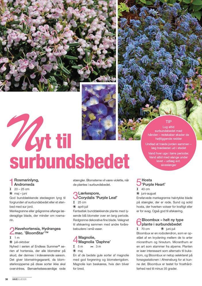 Her er Plantoramas tilbudsavis I tilbudsavisen finder du masser af gode tilbud samt inspiration til alt fra planter og blomster til havemøbler, vand i haven samt dyrecenter.