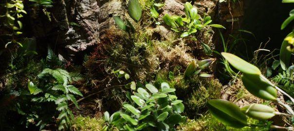 Orchidarium Planting List - Pumpkin Beth
