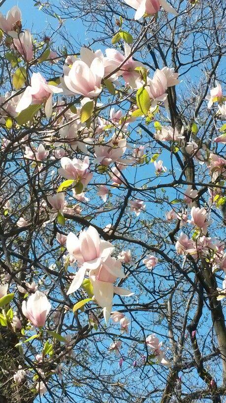 #Flower#pink #delicatissen