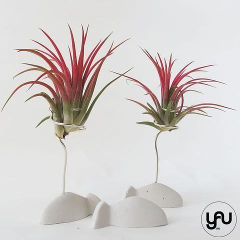 MARTURII plante aeriene in suport PESTISOR - M14 - https://www.yau.ro/collections/marturii-nunta-si-botez?page=1 - yauconcept - elenatoader