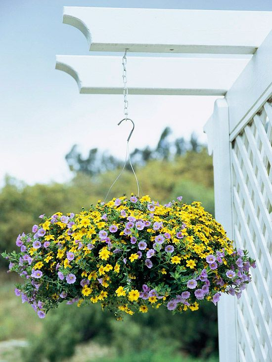 17 best images about garden colour art on pinterest. Black Bedroom Furniture Sets. Home Design Ideas