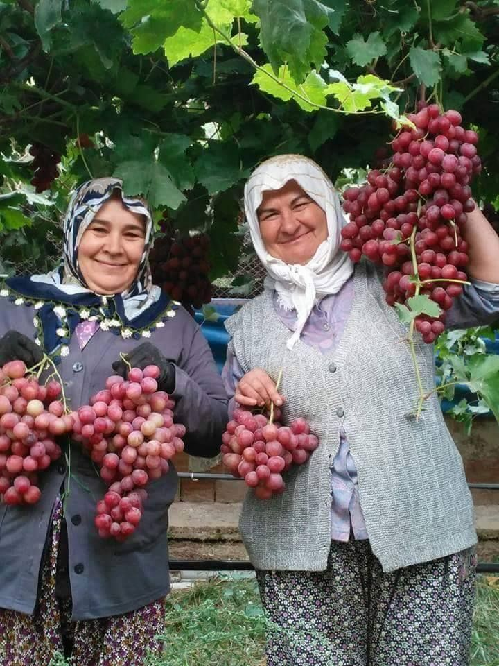 Turkish women with Grapes