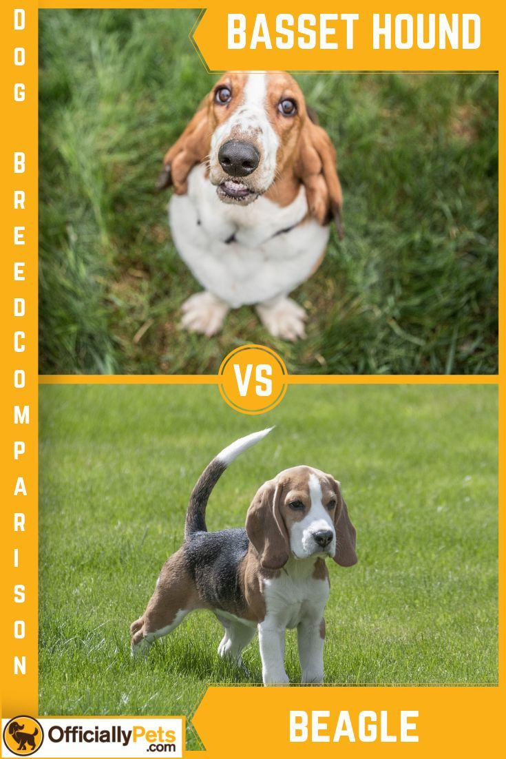 The Difference Between Dogs And Cats Basset Dog Animal Quotes