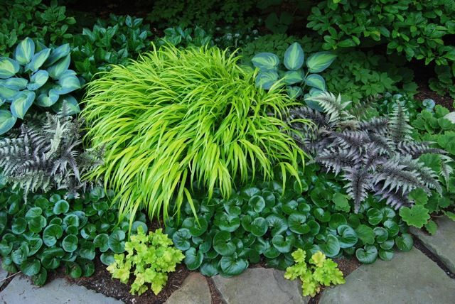 I keep running across photos of this garden, this is one of the prettiest combinations of shade plants I've seen.