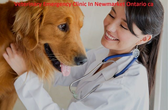 We All Can Take Care Of Our Pets But Vet Emergency In Newmarket Can Promote An Overall Health It Is Important Dog Health Giardia In Dogs Dog Health Tips