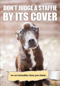 Don't judge a Staffie by its cover! | All Dogs Matter