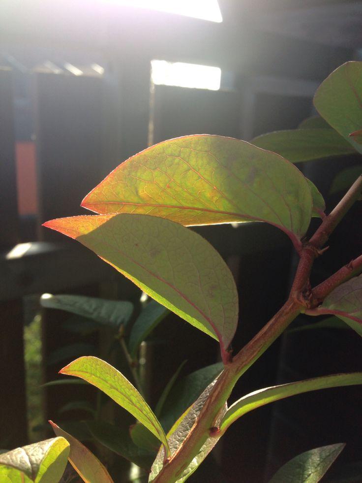 Der Herbst beginnt und färbt die Blätter langsam rot